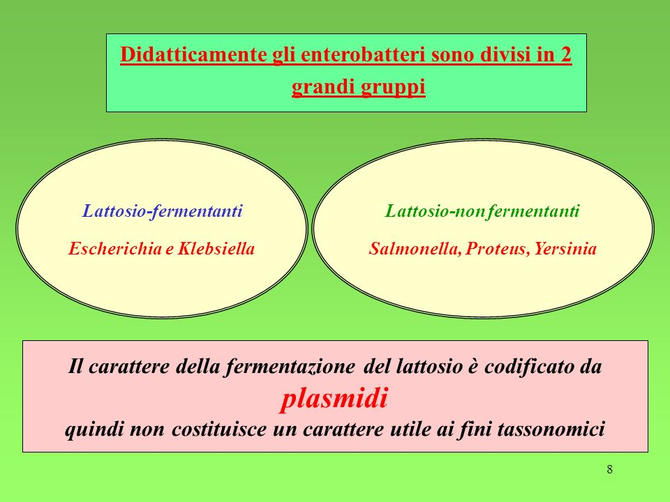 Didatticamente gli enterobatteri sono divisi in 2 grandi gruppi