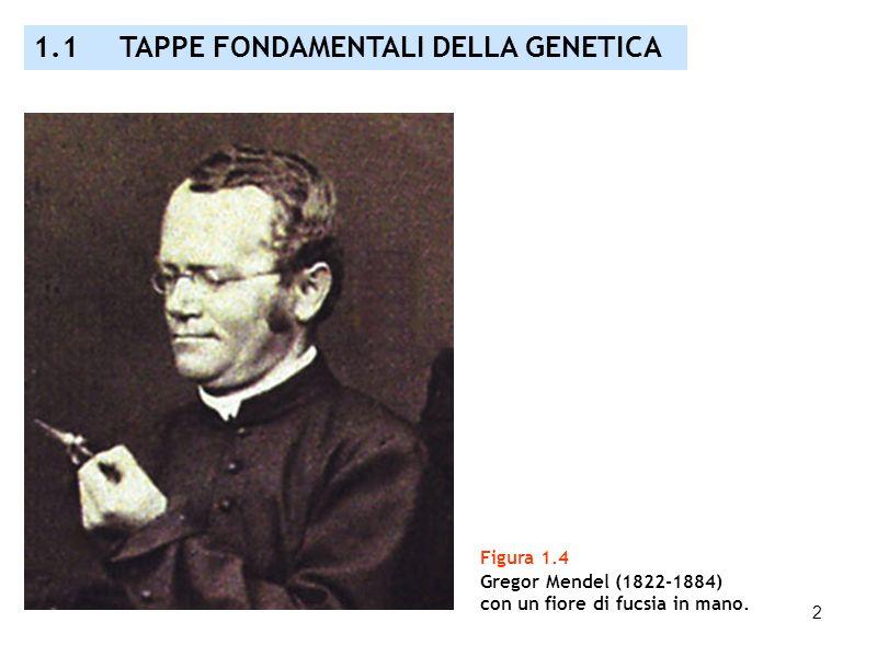 1.1 TAPPE FONDAMENTALI DELLA GENETICA