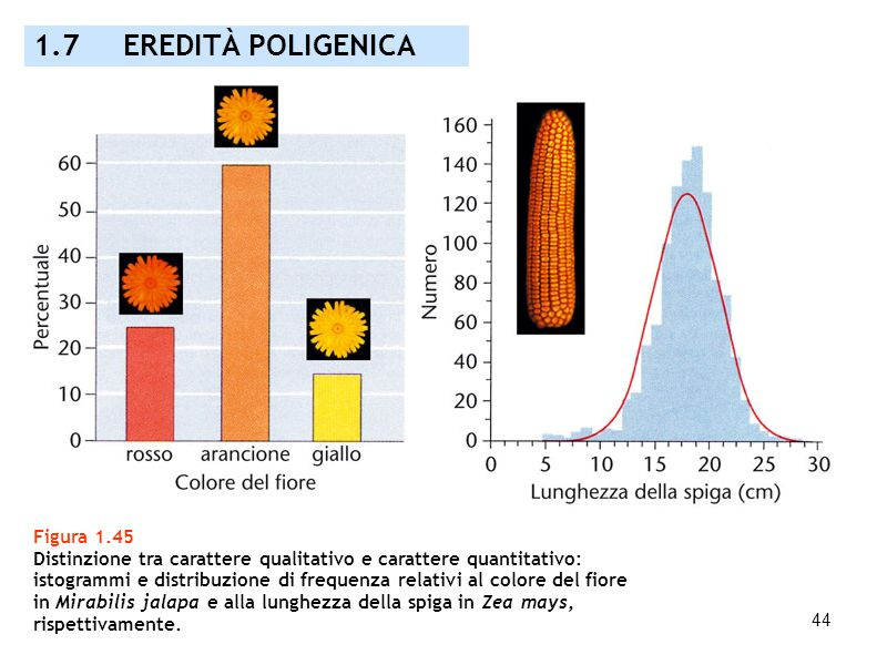 1.7 EREDITÀ POLIGENICA Figura 1.45