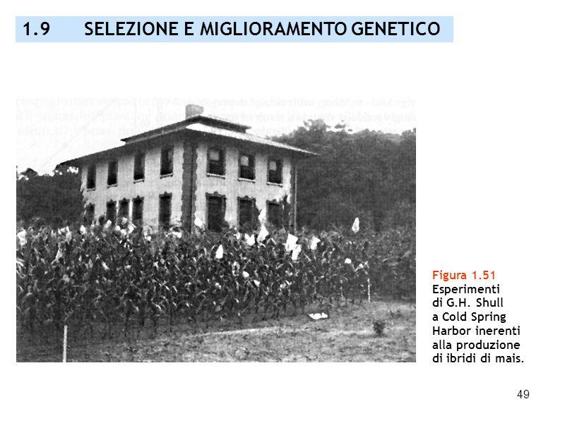 1.9 SELEZIONE E MIGLIORAMENTO GENETICO