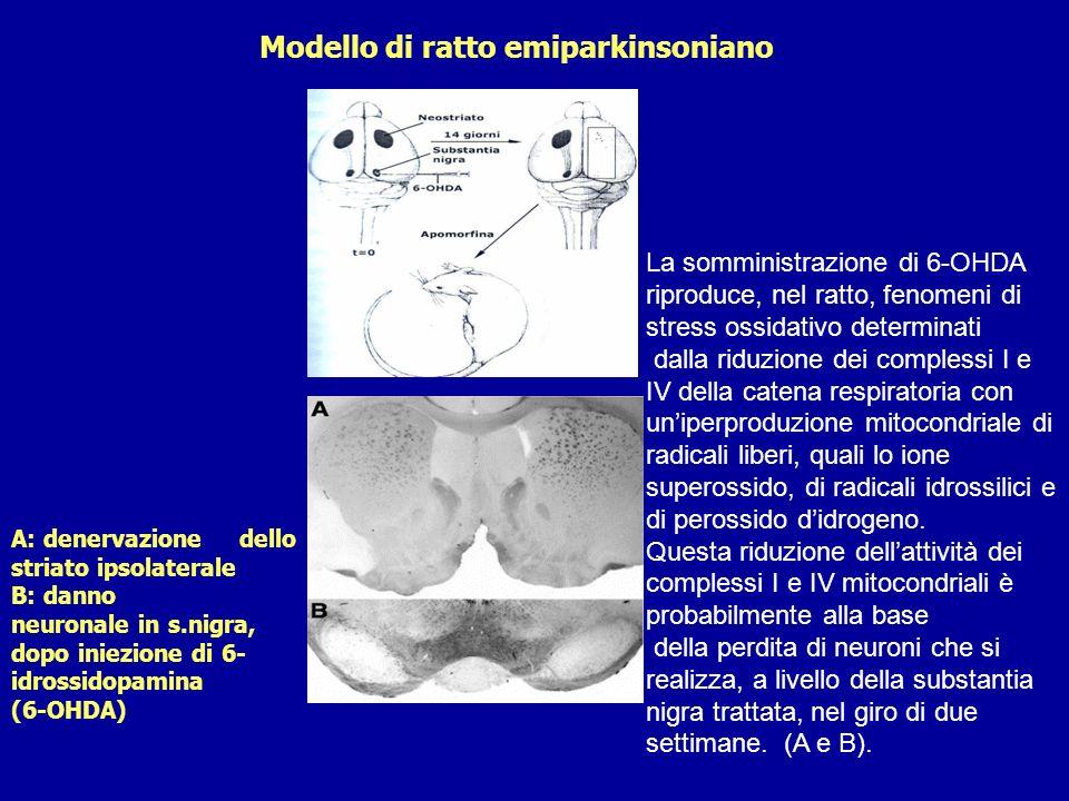 Modello di ratto emiparkinsoniano