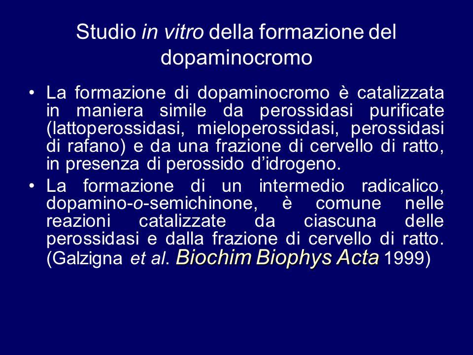 Studio in vitro della formazione del dopaminocromo