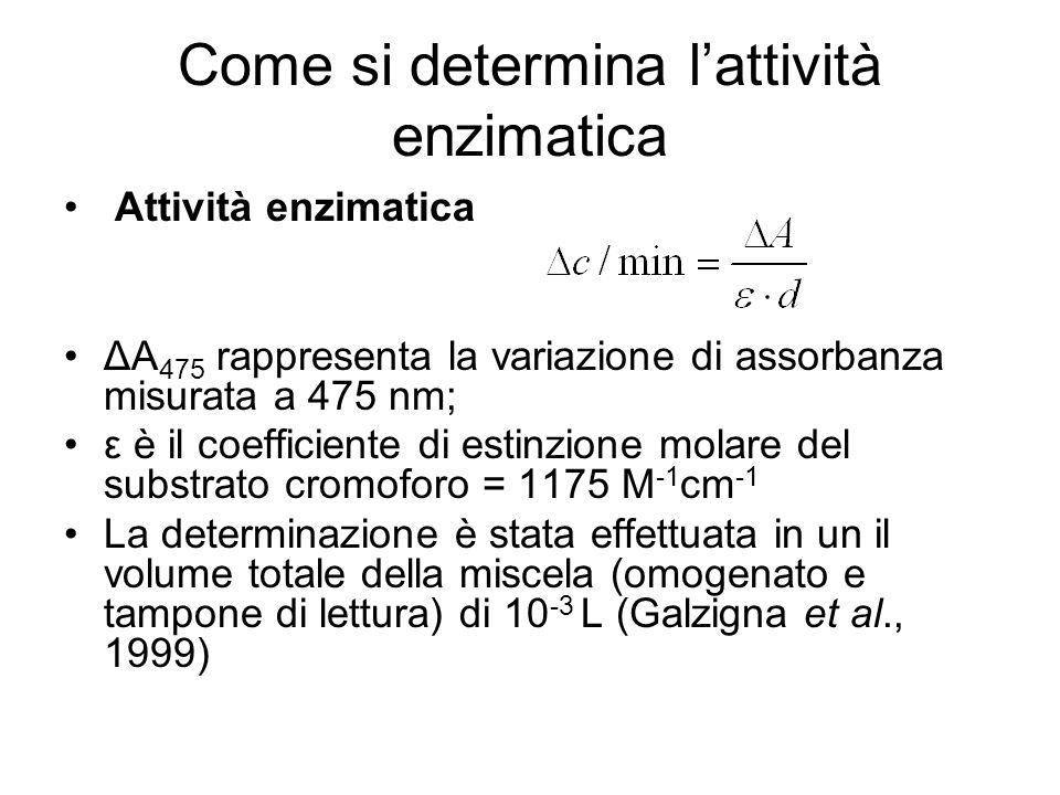 Come si determina l'attività enzimatica