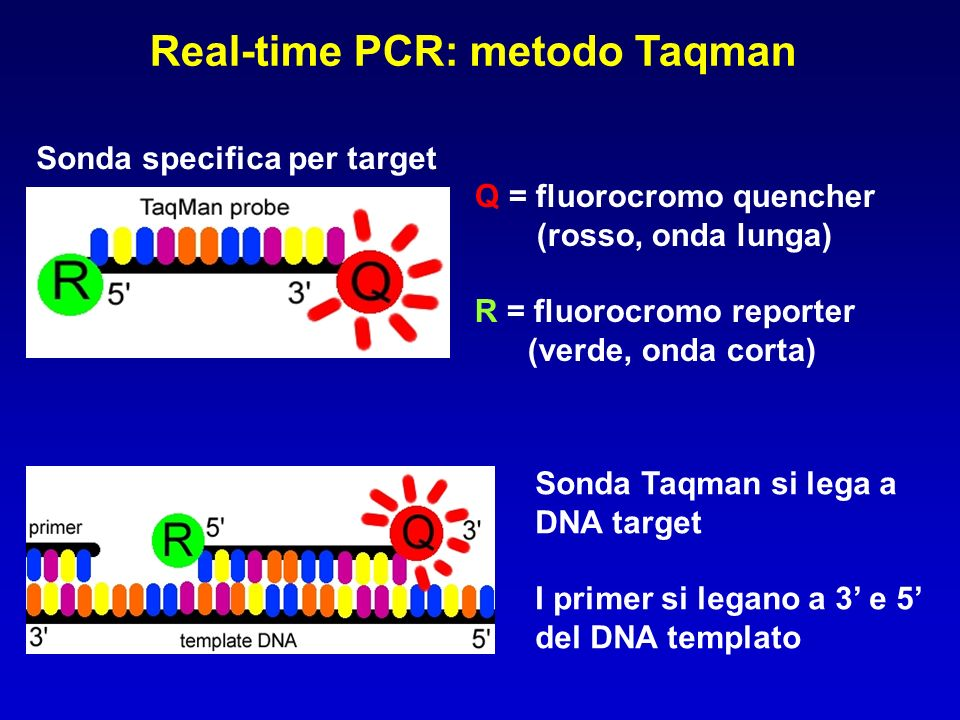 Real-time PCR: metodo Taqman