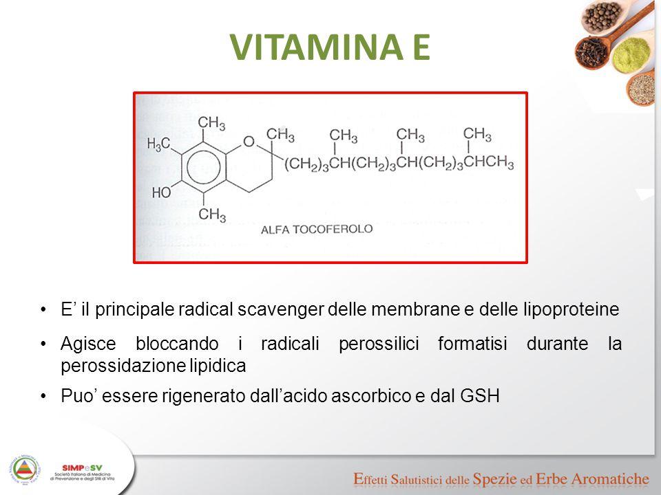 VITAMINA E E' il principale radical scavenger delle membrane e delle lipoproteine.