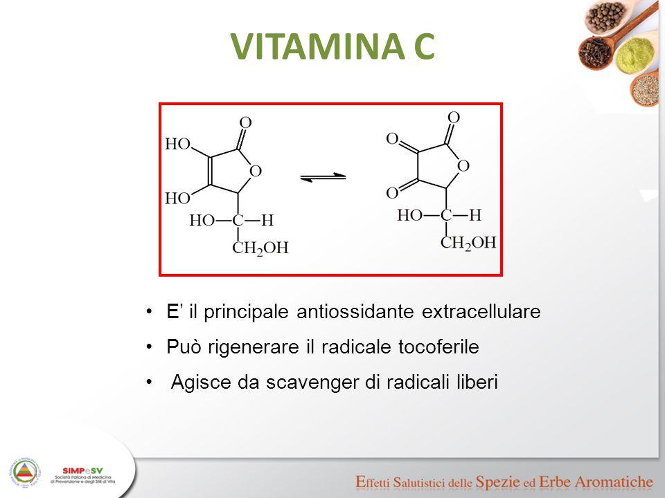 VITAMINA C E' il principale antiossidante extracellulare