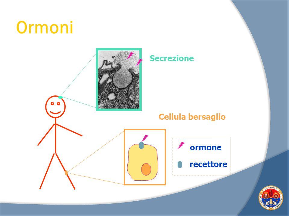 Ormoni Secrezione Cellula bersaglio ormone recettore