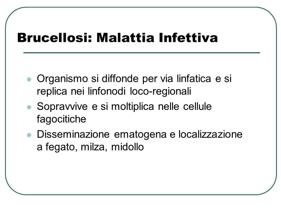 Brucellosi: Malattia Infettiva