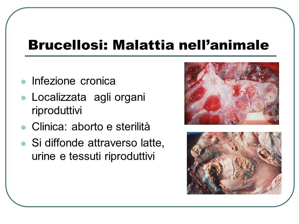 Brucellosi: Malattia nell'animale