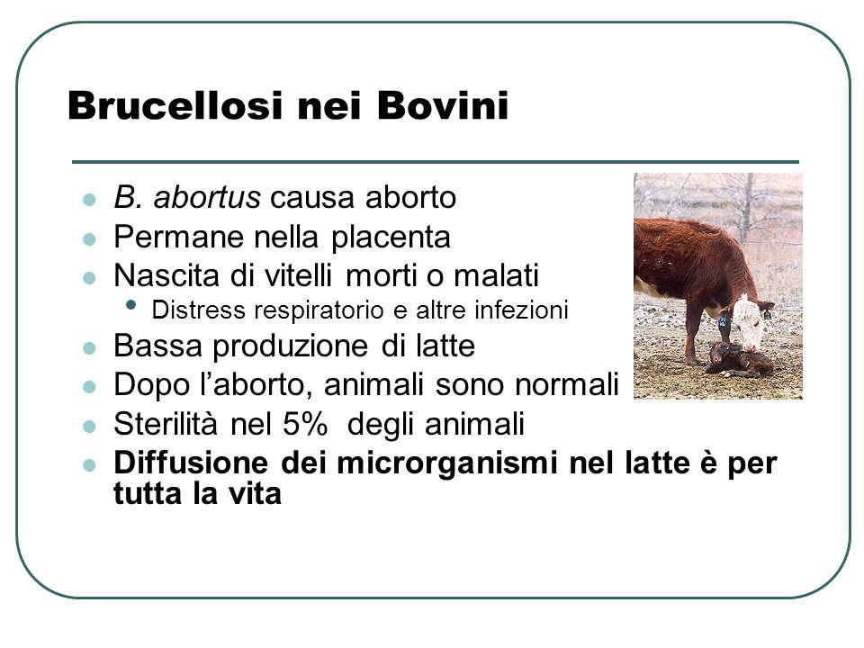 Brucellosi nei Bovini B. abortus causa aborto Permane nella placenta