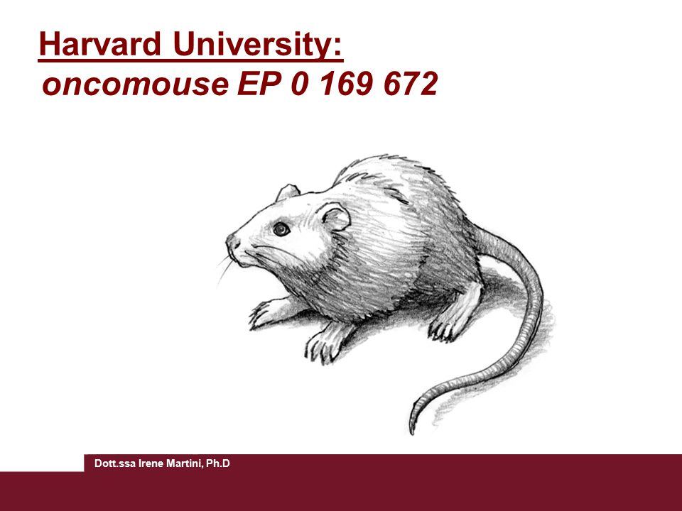 Harvard University: oncomouse EP 0 169 672