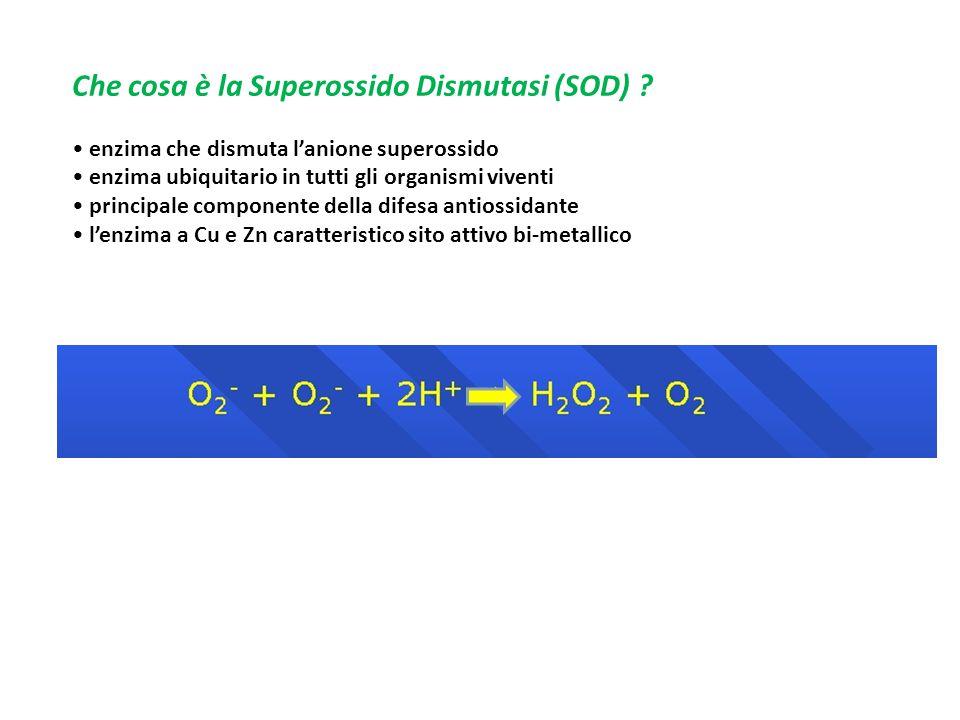 Che cosa è la Superossido Dismutasi (SOD)