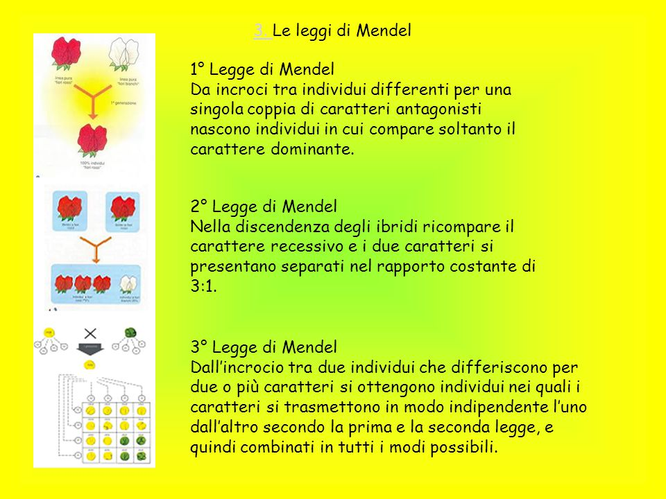 3. Le leggi di Mendel