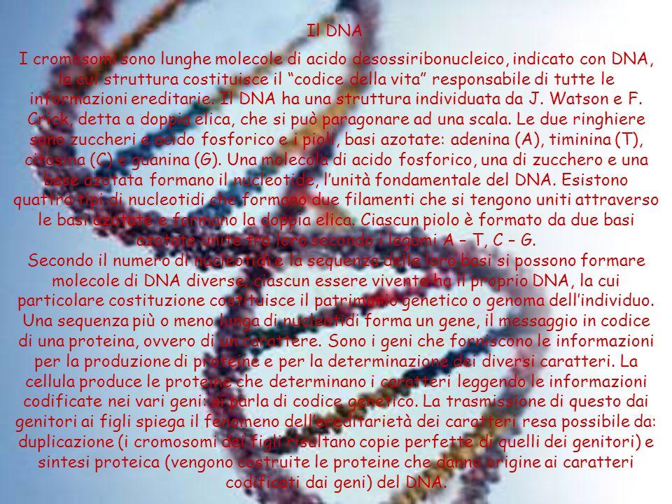 Il DNA
