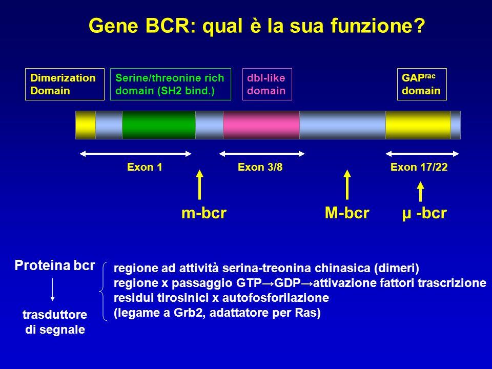 Gene BCR: qual è la sua funzione