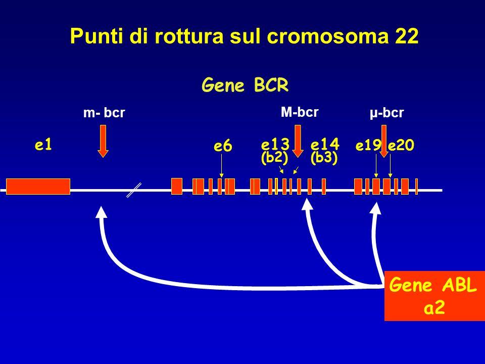Punti di rottura sul cromosoma 22