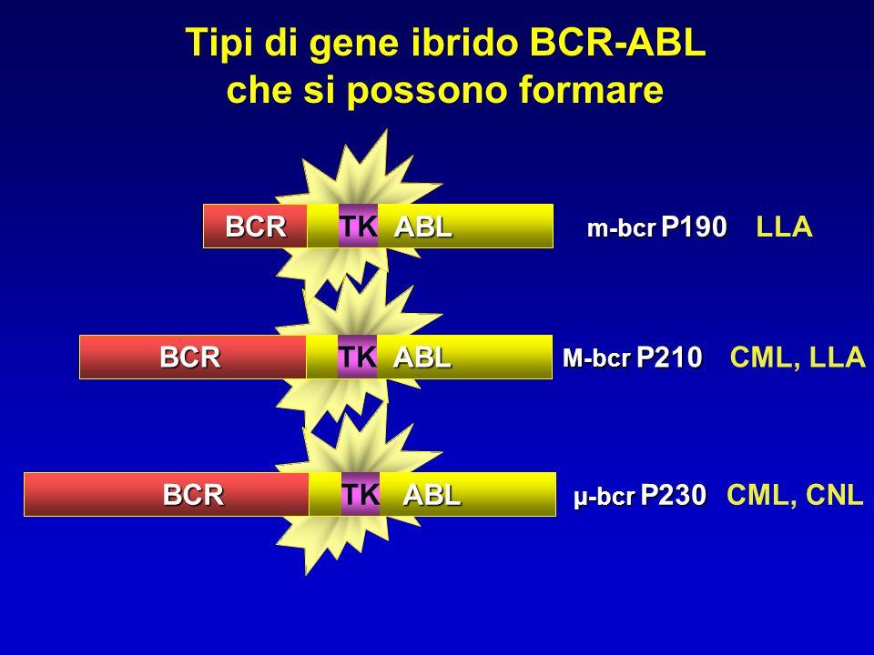 Tipi di gene ibrido BCR-ABL