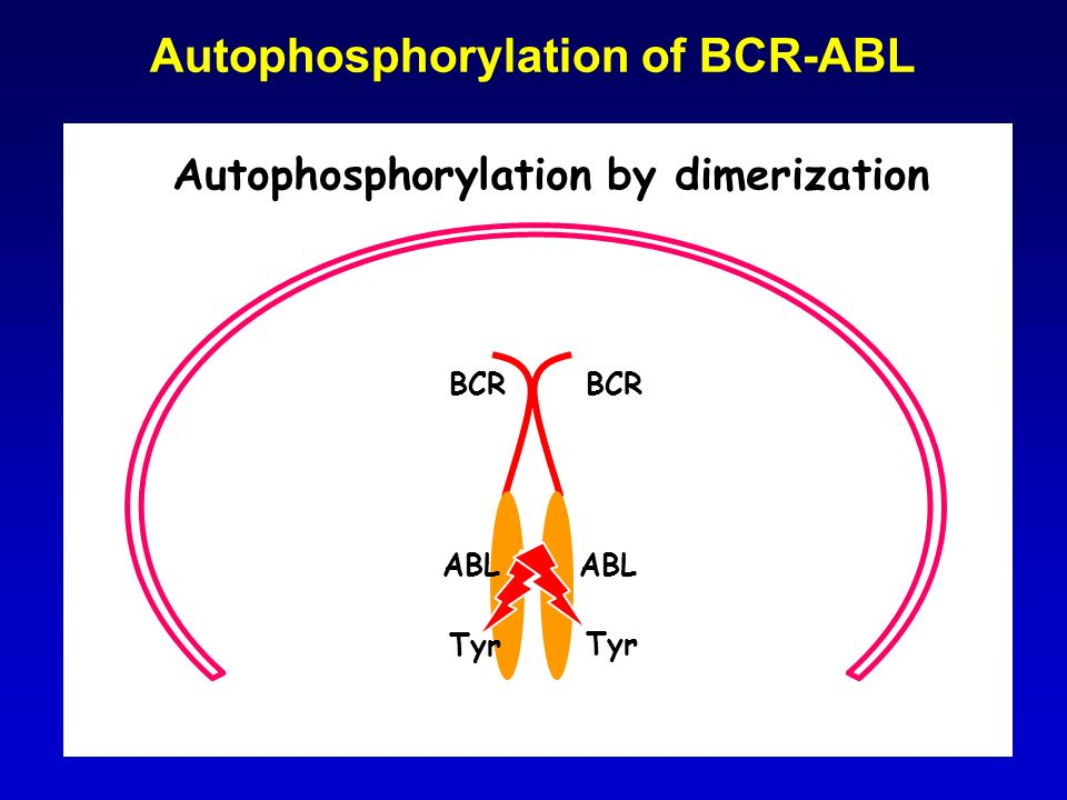 Autophosphorylation of BCR-ABL