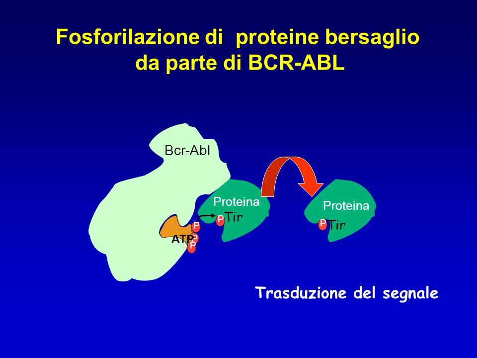 Fosforilazione di proteine bersaglio