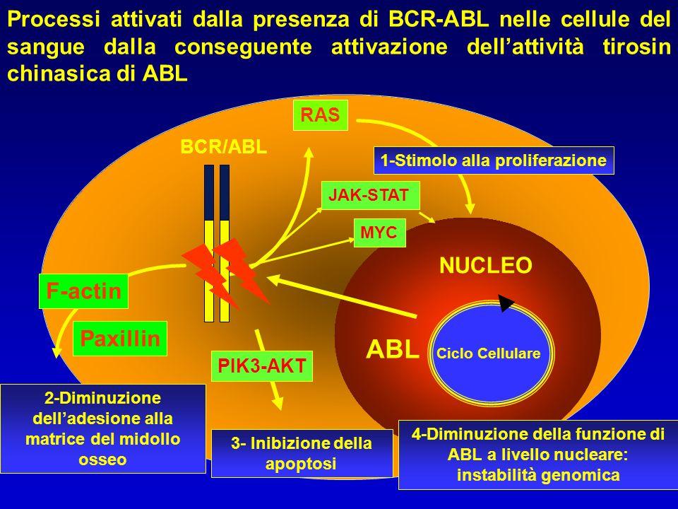 matrice del midollo osseo 3- Inibizione della apoptosi