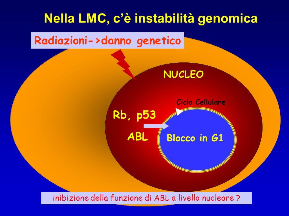 Nella LMC, c'è instabilità genomica