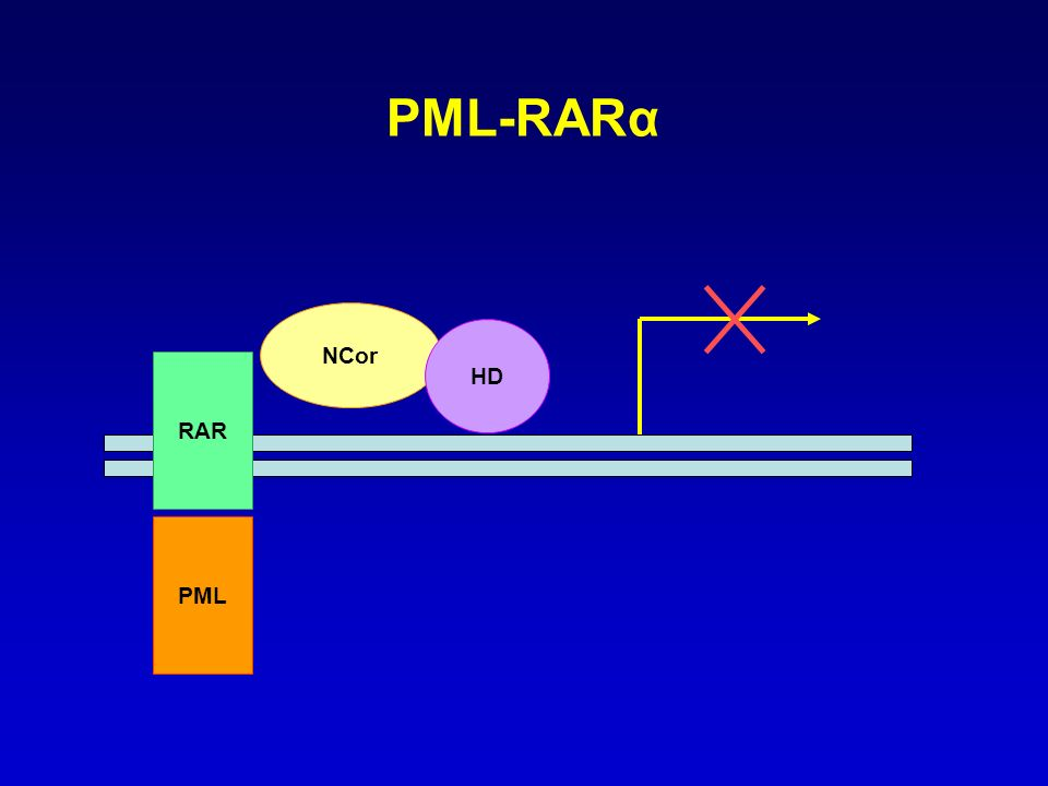 PML-RARα NCor HD RAR PML