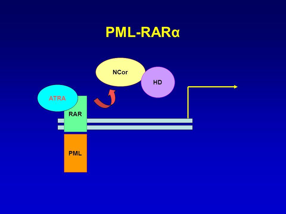 PML-RARα NCor HD ATRA RAR PML