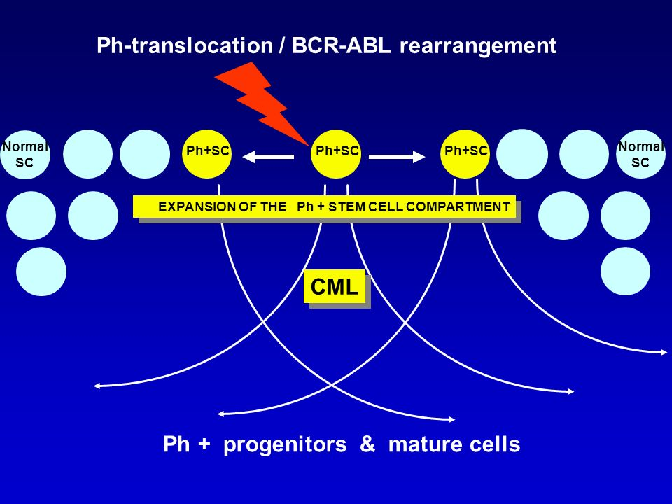 Ph-translocation / BCR-ABL rearrangement