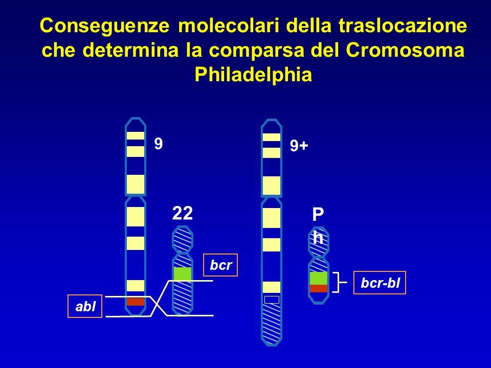 Conseguenze molecolari della traslocazione che determina la comparsa del Cromosoma Philadelphia