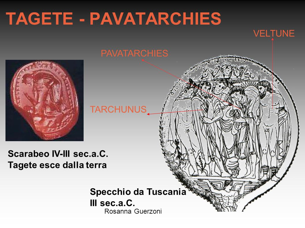 TAGETE - PAVATARCHIES VELTUNE PAVATARCHIES TARCHUNUS
