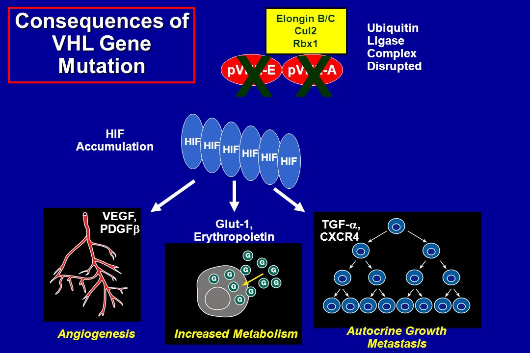 Consequences of VHL Gene
