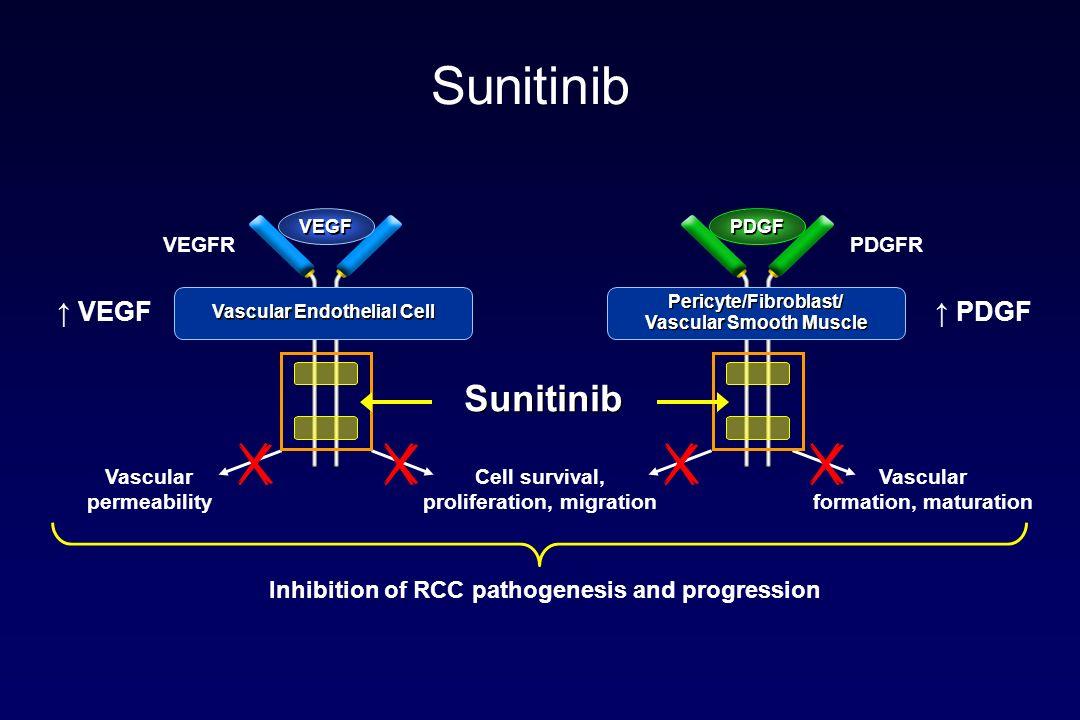 Sunitinib Sunitinib ↑ VEGF ↑ PDGF