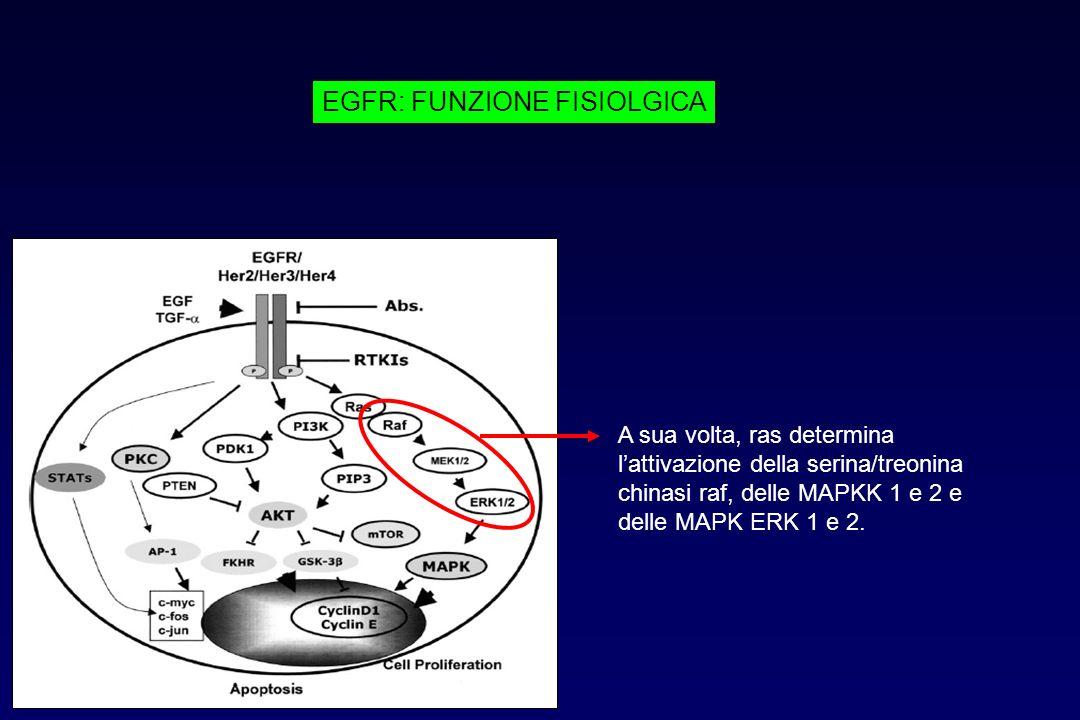 EGFR: FUNZIONE FISIOLGICA