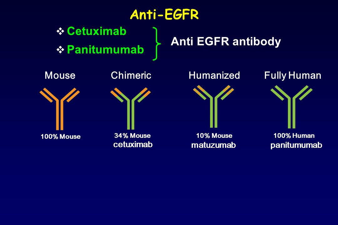 Anti-EGFR Cetuximab Panitumumab Anti EGFR antibody Mouse Chimeric
