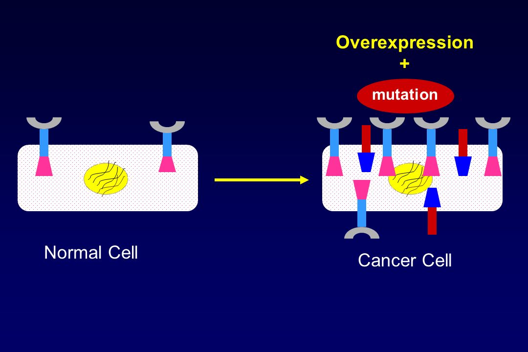 Overexpression + mutation Normal Cell Cancer Cell