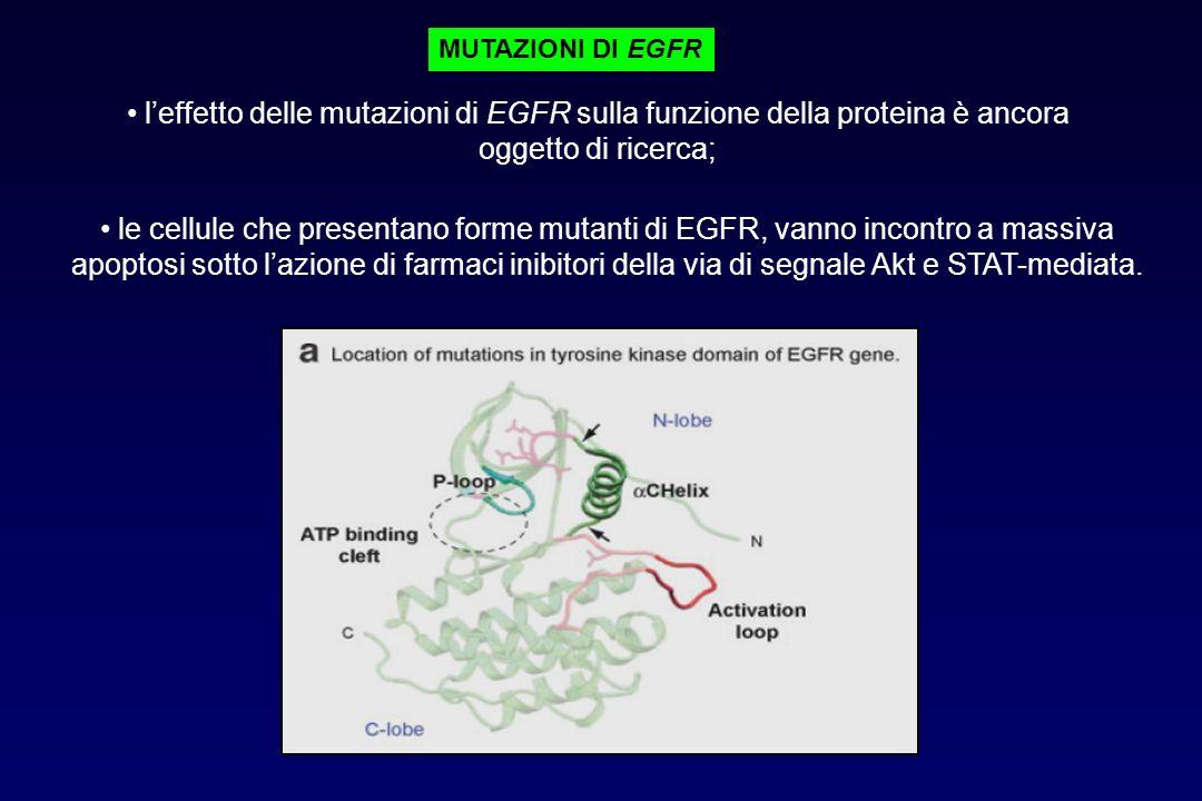MUTAZIONI DI EGFR l'effetto delle mutazioni di EGFR sulla funzione della proteina è ancora oggetto di ricerca;