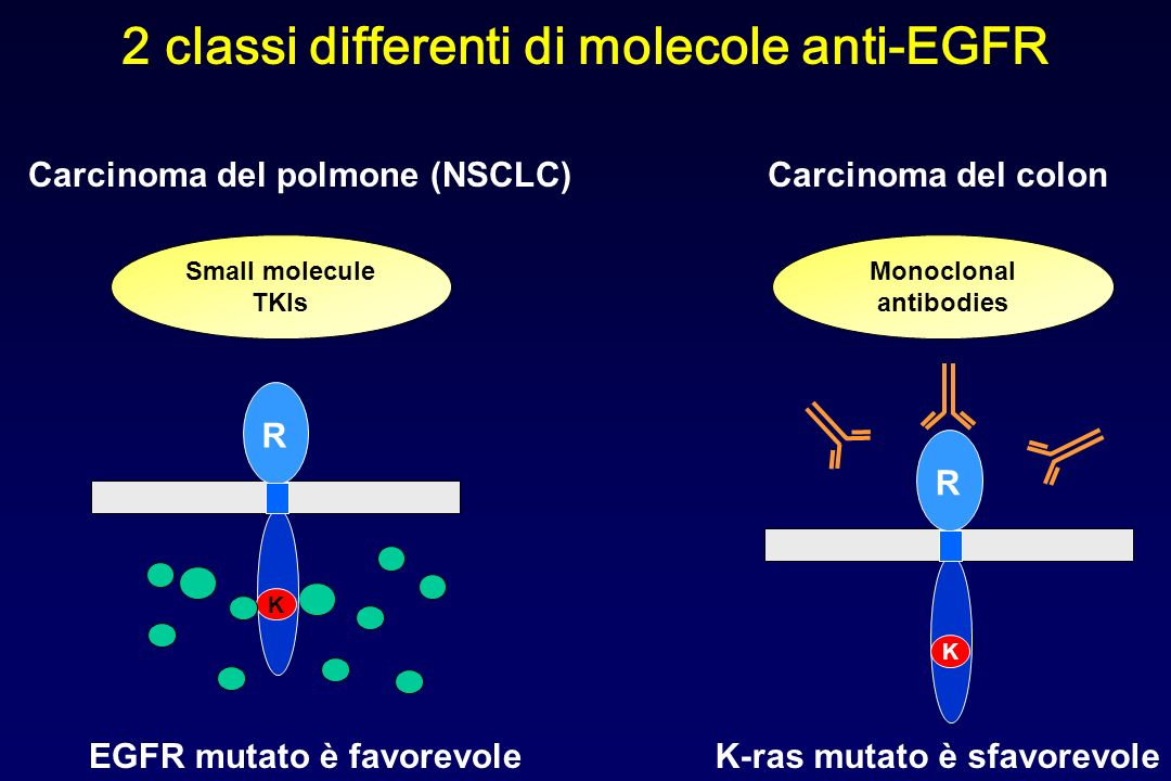 2 classi differenti di molecole anti-EGFR Monoclonal antibodies