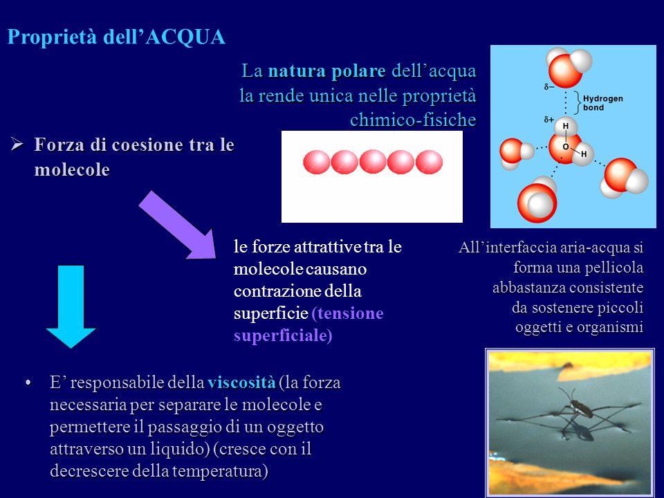 Proprietà dell'ACQUA La natura polare dell'acqua la rende unica nelle proprietà chimico-fisiche. Forza di coesione tra le molecole.