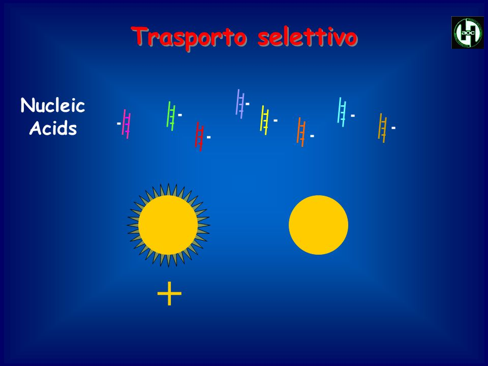 Trasporto selettivo Nucleic Acids - +