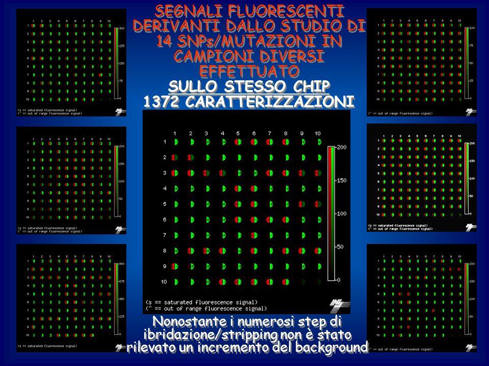 SULLO STESSO CHIP 1372 CARATTERIZZAZIONI