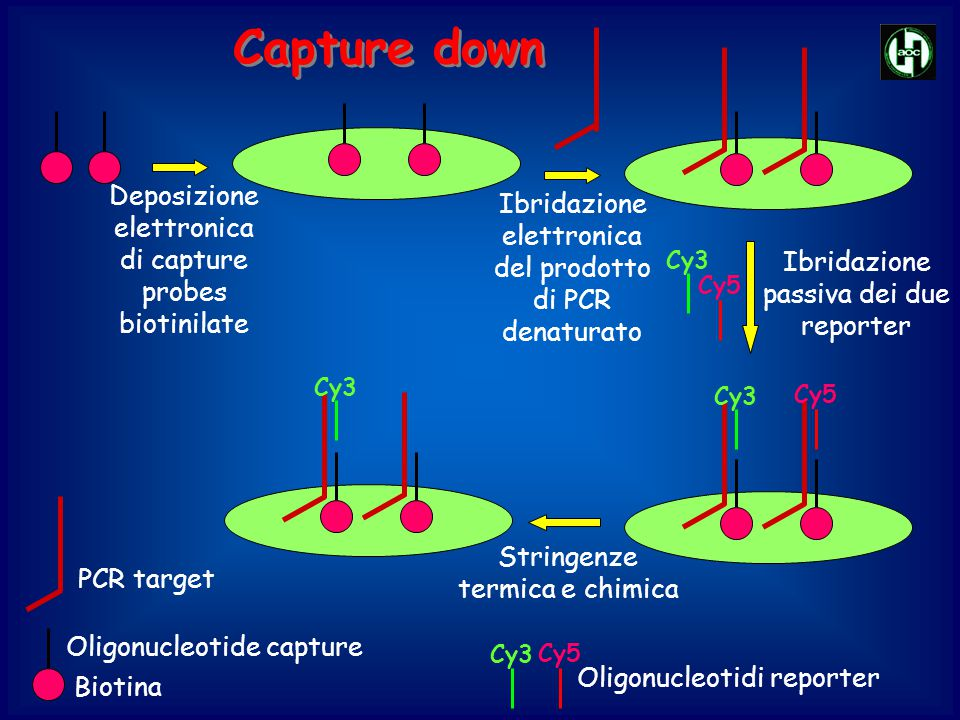 Capture down Deposizione elettronica di capture probes biotinilate