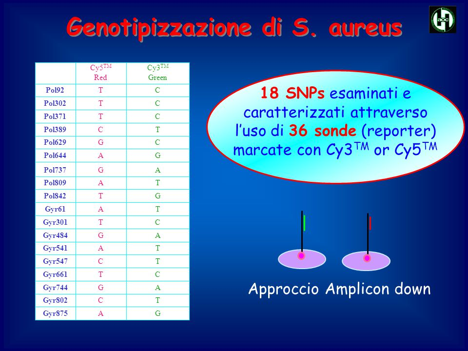 Genotipizzazione di S. aureus