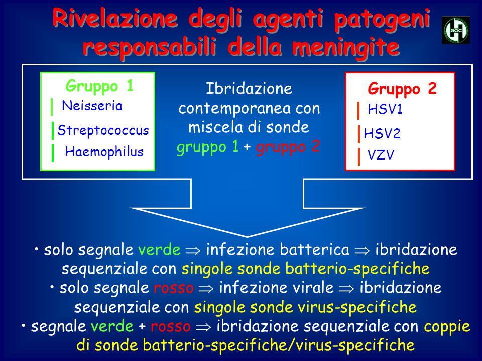Rivelazione degli agenti patogeni responsabili della meningite