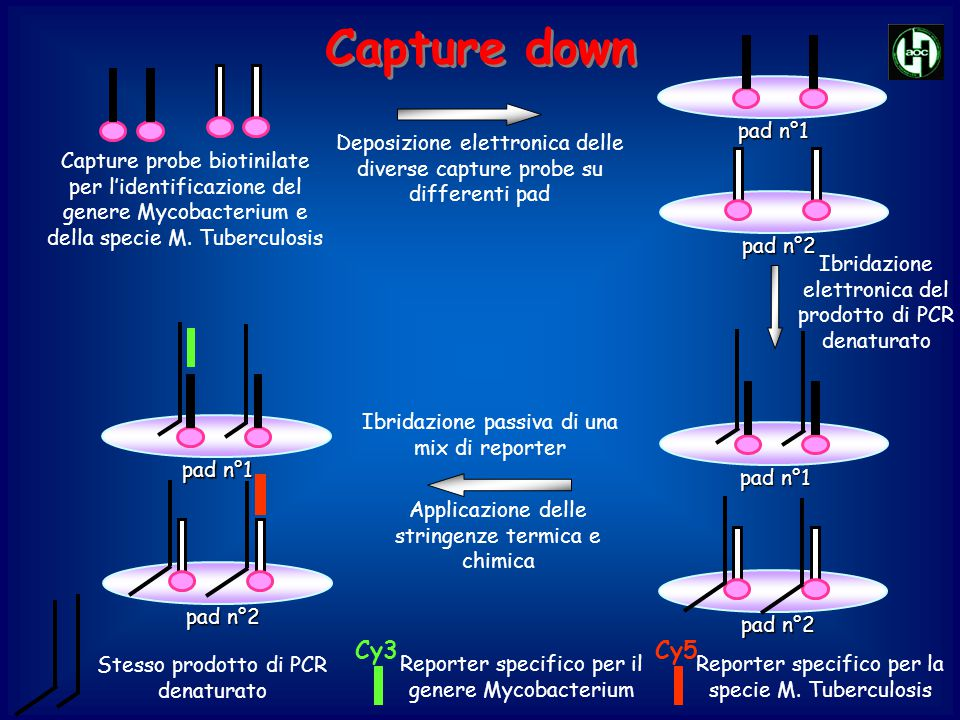 Capture down Deposizione elettronica delle diverse capture probe su differenti pad.