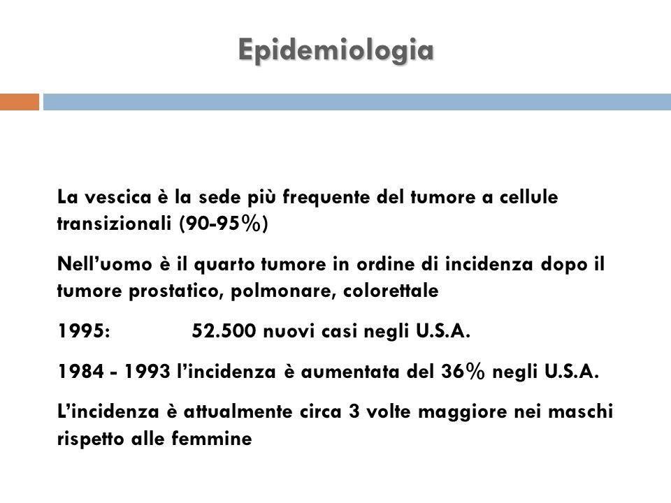 Epidemiologia La vescica è la sede più frequente del tumore a cellule transizionali (90-95%)