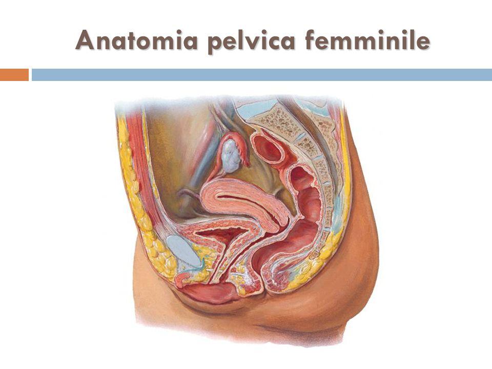 Anatomia pelvica femminile