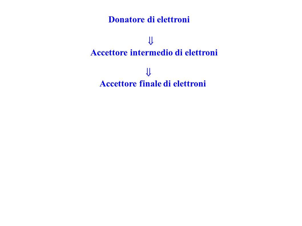 Accettore intermedio di elettroni