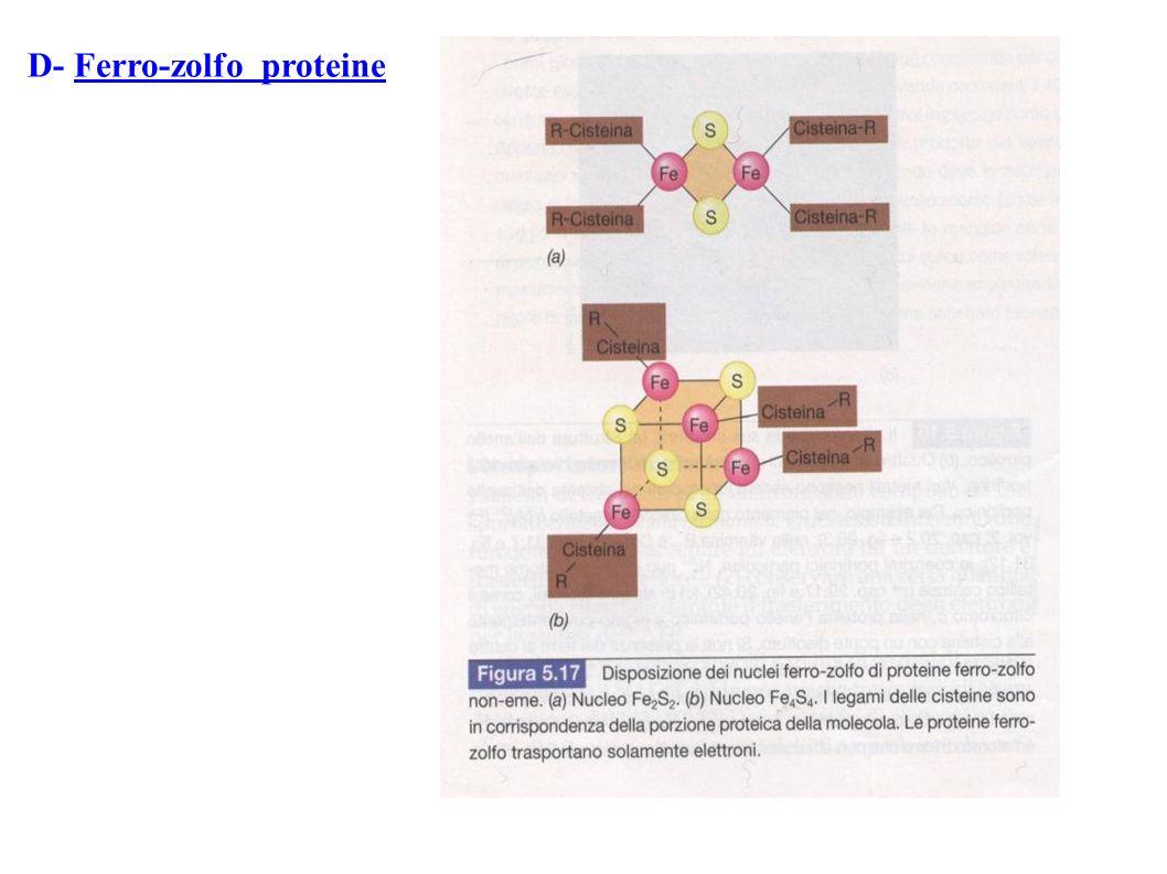 D- Ferro-zolfo proteine
