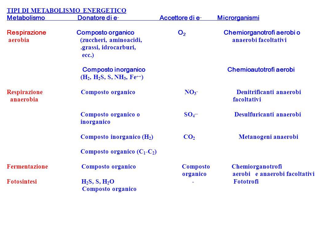 TIPI DI METABOLISMO ENERGETICO