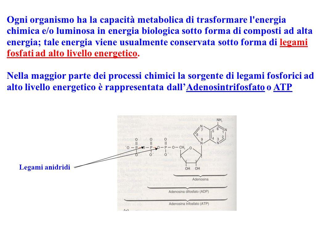 Ogni organismo ha la capacità metabolica di trasformare l energia chimica e/o luminosa in energia biologica sotto forma di composti ad alta energia; tale energia viene usualmente conservata sotto forma di legami fosfati ad alto livello energetico.
